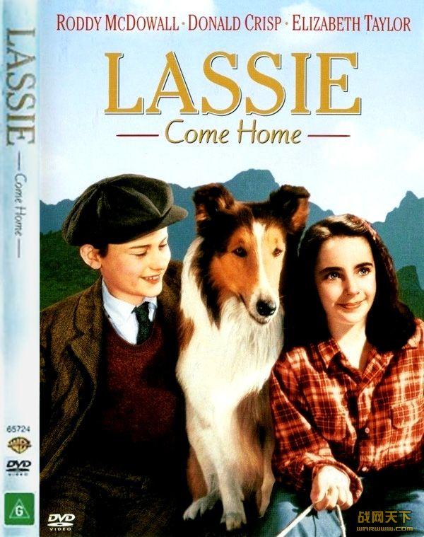 莱西回家/灵犬莱西