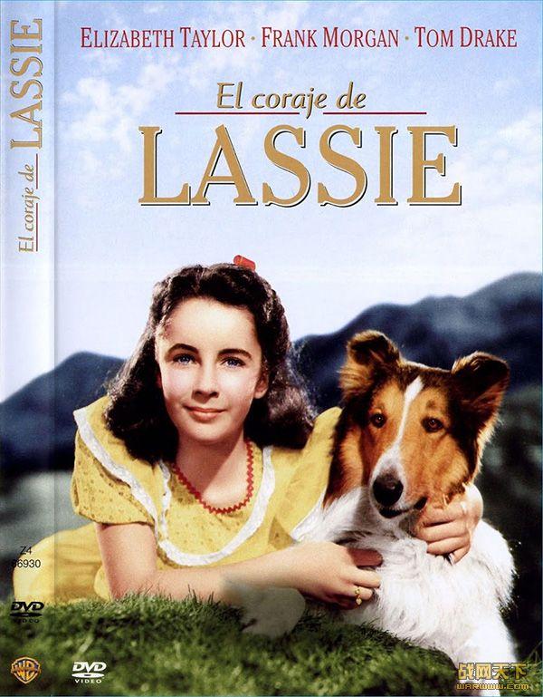 灵犬和凯茜(COURAGE OF LASSIE)海报