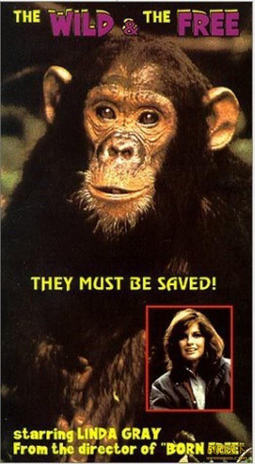 自由的猩猩